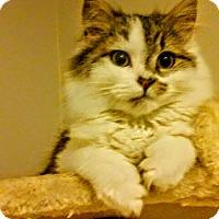 Adopt A Pet :: Sophie - Gettysburg, PA