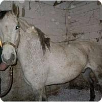 Adopt A Pet :: Eddie - Dewey, IL