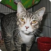 Adopt A Pet :: Montana - Shelton, WA
