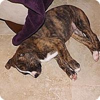 Adopt A Pet :: Twinkle - Phoenix, AZ
