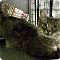 Adopt A Pet :: Annabelle - Denton, TX