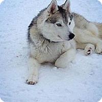 Adopt A Pet :: Rukus - Egremont, AB