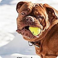 Adopt A Pet :: Sasha - La Pêche, QC