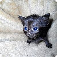Adopt A Pet :: Pattie, Robby, Jessie, Mattie - Xenia, OH
