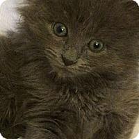 Adopt A Pet :: Smokey - Reston, VA