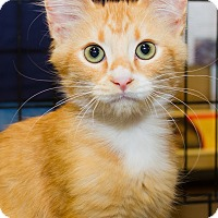 Adopt A Pet :: McGraw - Irvine, CA