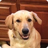 Adopt A Pet :: Ellie - Burbank, CA