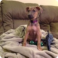 Adopt A Pet :: Sasha - Middlesex, NJ