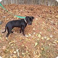Adopt A Pet :: Jasmine - Odenville, AL