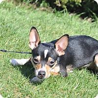 Adopt A Pet :: Neila - Tumwater, WA