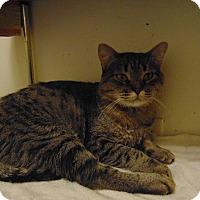 Adopt A Pet :: Gurgi - Colorado Springs, CO