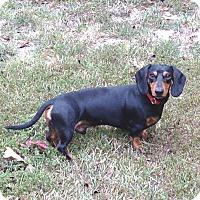 Adopt A Pet :: Whiskers - Westport, CT
