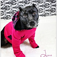 Adopt A Pet :: Luna - Lake Charles, LA