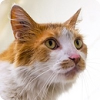 Adopt A Pet :: Rumba - Vancouver, BC