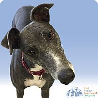 Adopt A Pet :: Indy - Swanzey, NH