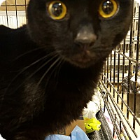 Adopt A Pet :: Utley - Trevose, PA