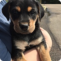 Adopt A Pet :: Winona - Starkville, MS