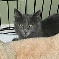 Adopt A Pet :: Suzette - Houston, TX