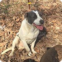 Adopt A Pet :: Henry - Buffalo, NY
