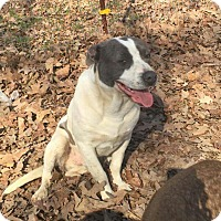 Adopt A Pet :: Henry (ADOPTED) - Buffalo, NY