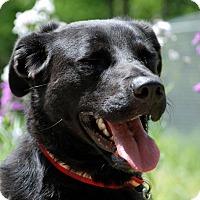 Adopt A Pet :: Annie - Salem, WV