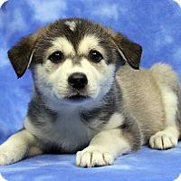 Adopt A Pet :: FERN - Westminster, CO