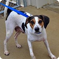 Adopt A Pet :: Remi - Avon, NY