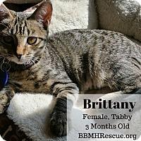 Adopt A Pet :: Brittany - Temecula, CA