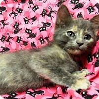 Adopt A Pet :: Sadie - Columbus, NE