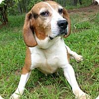 Adopt A Pet :: Tallulah - Canterbury, CT
