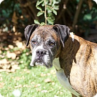 Adopt A Pet :: Marlo - Chula Vista, CA
