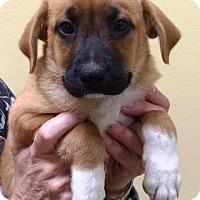 Adopt A Pet :: I'M ADOPTED Treatz Neyt - Oswego, IL