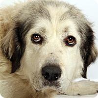Adopt A Pet :: Lori Pyr - St. Louis, MO