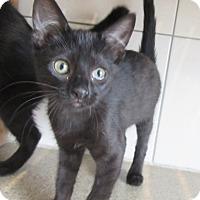 Adopt A Pet :: Karen  $60 - North Richland Hills, TX