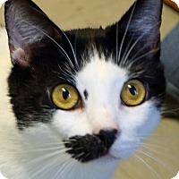 Adopt A Pet :: Boscoe - Sprakers, NY