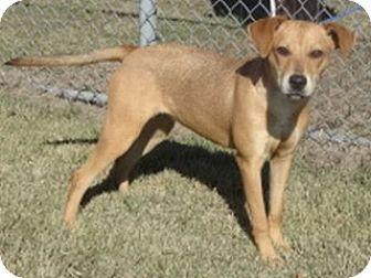 Shepherd (Unknown Type)/Terrier (Unknown Type, Medium) Mix Puppy for adoption in Olive Branch, Mississippi - Winnie