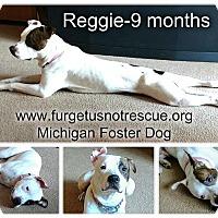 Staffordshire Bull Terrier Mix Dog for adoption in Hazel Park, Michigan - Reggie