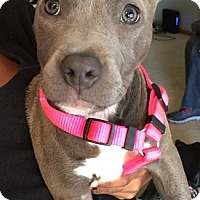 Adopt A Pet :: Piper - Lincoln, NE
