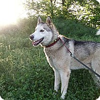 Adopt A Pet :: Zeus: would love agility - Augusta County, VA
