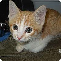 Adopt A Pet :: Sherman - Medina, OH