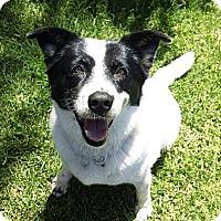 Adopt A Pet :: Sadie - Corona, CA