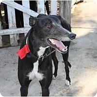 Adopt A Pet :: Jay - Philadelphia, PA