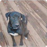 Adopt A Pet :: Gracie - Seneca, SC