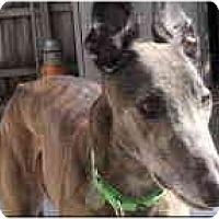 Adopt A Pet :: Penske - St Petersburg, FL