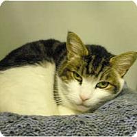 Adopt A Pet :: Cyd - Mission, BC