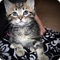 Adopt A Pet :: Hugo - Xenia, OH