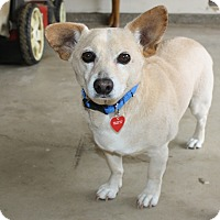Adopt A Pet :: Doolie - 22 lbs. Easy dog! - Yorba Linda, CA