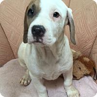 Adopt A Pet :: Kirby - Schaumburg, IL