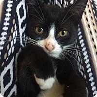 Adopt A Pet :: Shawn - Philadelphia, PA
