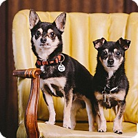 Adopt A Pet :: Mick & Ozzy - Portland, OR